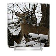 Whitetail Buck Shower Curtain