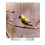 2164 - Goldfinch Shower Curtain