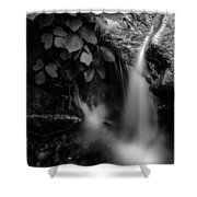 Broad River Flowing Through Wooded Forest Shower Curtain