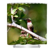 2274 - Hummingbird Shower Curtain
