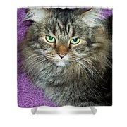 Maine Coon Cat Shower Curtain