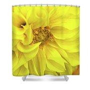Closeup Of A Colourful Flower Shower Curtain