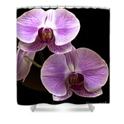Orchids Kauai Shower Curtain