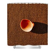 Beach Shell Shower Curtain