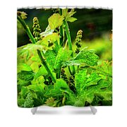 2629- Comsrock Winery Shower Curtain