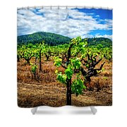 2638- Coffaro Vineyard Shower Curtain