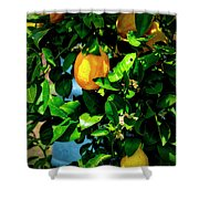 2644- Lemon Tree Shower Curtain
