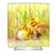 2736 - Canada Goose Shower Curtain