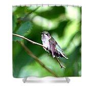 2757 -  Hummingbird Shower Curtain