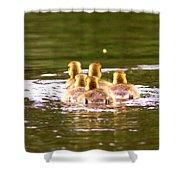 2767 - Canada Goose Shower Curtain