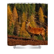 Red Deer Stag Shower Curtain