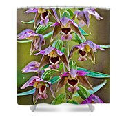 Helleborine On North Country Trail In Pictured Rocks National Lakeshore-michigan  Shower Curtain