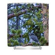 Hawk Owl Shower Curtain