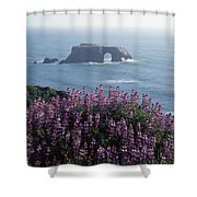 2a6101 Arched Rock And Blue Pod Lupine Ca Shower Curtain