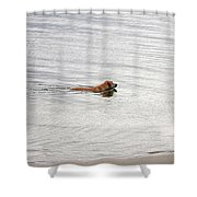 3 - Golden Lab Lovin Life Shower Curtain