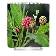 3 And 1 Shower Curtain