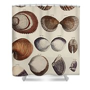Aquatic Animals - Seafood - Shells - Mussels Shower Curtain