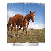 Arrowhead Shower Curtain