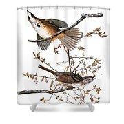 Audubon: Sparrow, (1827-38) Shower Curtain