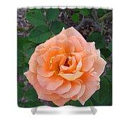 Australia - Orange Rose Flower Shower Curtain