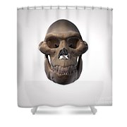 Australopithecus Skull Shower Curtain