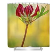 Azalea Buds Shower Curtain