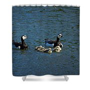 Barnacle Goose Shower Curtain