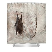 Bats Inside The Pyramid At Grupo Nohoch Mul At The Coba Ruins  Shower Curtain
