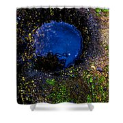 Beach Rams Shower Curtain