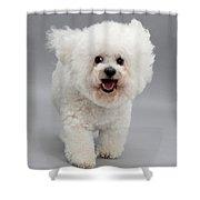 Bichon Frise Shower Curtain
