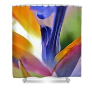 3 Bird Of Paradise Macro Shower Curtain