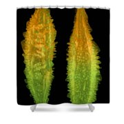 Bitter Melon Fruit, X-ray Shower Curtain