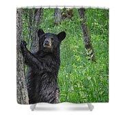 Black Bear Yearling Shower Curtain