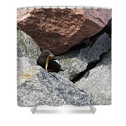Black Guillemot Shower Curtain