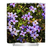 Bluets Shower Curtain