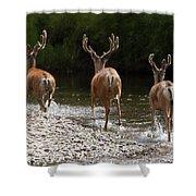 3 Bucks Shower Curtain