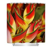Bunch Of Heliconia Shower Curtain