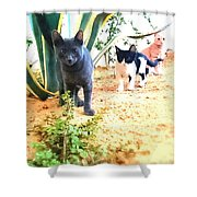 3 Cat Attack Shower Curtain