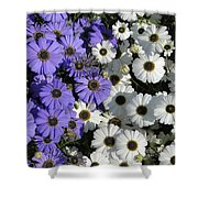Cineraria Shower Curtain