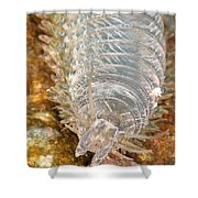 Clam Worm Shower Curtain