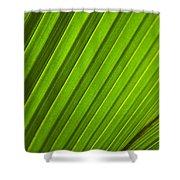 Coconut Palm Leaf Shower Curtain