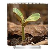 Coffee Seedling Shower Curtain
