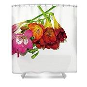 Colorful Freesia Shower Curtain