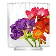 Colorful Freesias Shower Curtain