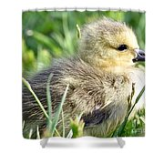 Cute Baby Goose Shower Curtain