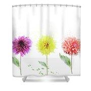 Dahlia Flowers  Shower Curtain