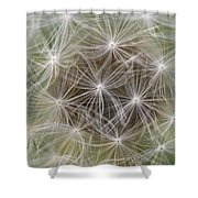 Dandelion Close-up. Shower Curtain