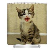 3 Day Old Kitten Shower Curtain