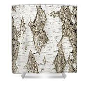 Detail Of Brich Bark Texture Shower Curtain