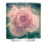 Digitally Manipulated Pink English Rose  Shower Curtain